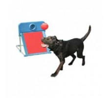 Rosewood pet Flyball