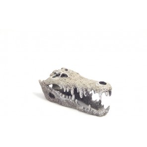 Rosewood pet Nile Crocodile Skull Large