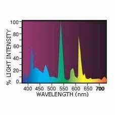 Life-Glo spektras
